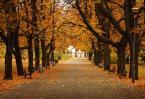 """asiasido """"jesiennie"""" (2006-11-01 15:56:01) komentarzy: 31, ostatni: ładne kolory i jesień itd, jednak moim zdaniem kosze na smieci i ta budowla na końcu zbyt mocno przyciagają uwagę, bo są najjaśniejszymi punktami na zdjęciu..."""