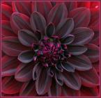 """Jacek - Bandit Jack """"Struktury natury III"""" (2006-11-02 16:37:45) komentarzy: 31, ostatni: Bardzo lubię takie kwiaty"""