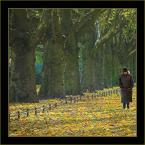"""Wołodytjowski """"Listopadowy spacer"""" (2006-11-05 12:53:56) komentarzy: 65, ostatni: drzewa jak z akwareli ...plamiste oświetlenie dało taki efekt; nie wnikając w obróbkę jesteś mistrzem kompozycji kadru, nikt tak starannie nie kadruje na tym forum, a Twoje zdjęcia tchną spokojem i pięknem.... pozdrawiam"""