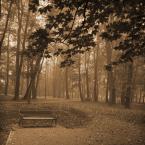 """DELF """"otulona jesienią"""" (2006-11-05 18:28:36) komentarzy: 24, ostatni: przyjemniutko i nastrojowo tutaj. fajna fotka. pozdro!"""