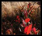 """KarmazyNowy """"barwy jesieni"""" (2006-11-07 15:55:33) komentarzy: 60, ostatni: kolor to ci wyszedł Boski:)"""