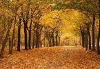 """asiasido """"jesiennie II"""" (2006-11-08 16:08:47) komentarzy: 35, ostatni: Jesienne klimaty:) Rewela"""