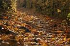 """daniel8 """"jesień"""" (2006-11-10 19:06:20) komentarzy: 3, ostatni: bardzo ciekawe dokąd droga ta prowadzi i Kto na jej końcu czeka..."""