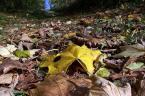 """KarmazyNowy """"żółty, jesienny ..."""" (2006-11-10 20:05:06) komentarzy: 41, ostatni: Ewidetnie jesień nastała. Co do tego nei ma wątpliwosci,  zdjecie bardzo ciekawe. Plus za  kadr."""