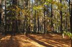 """Antoni Dziuban """"jesienny spacer"""" (2006-11-11 20:23:06) komentarzy: 23, ostatni: ładny las"""