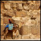 """malisz """"kameleon z garbem"""" (2006-11-12 16:07:46) komentarzy: 65, ostatni: świetne"""