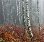 """Green Shadow """""""" (2006-11-14 16:59:04) komentarzy: 16, ostatni: bdb ... kolorystyka świetna ..."""