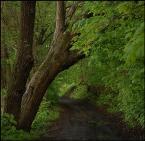 """Green Shadow """""""" (2006-11-14 17:04:13) komentarzy: 8, ostatni: Świetne"""