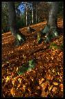 """Tomasz Stawowy """"a w Beskidzie jesień... (V)"""" (2006-11-14 22:09:35) komentarzy: 50, ostatni: idzie po mnie ten dinozaur i mnie zeżre :D"""