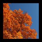 """Senn Silvaar """"jesień"""" (2006-11-16 21:19:40) komentarzy: 9, ostatni: jesienne barwy :) podoba mi sie bardzo  pozdro i zapraszam do siebie :)"""