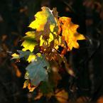 """Ravkosz """"malowanka jesienna #4"""" (2006-11-19 14:46:26) komentarzy: 35, ostatni: podoba mi się światło"""
