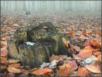 """Wołodytjowski """"Kolory jesieni #6"""" (2006-11-19 21:50:46) komentarzy: 27, ostatni: Nostalgia zaduma ...  Pozdrawiam PiotrPP"""