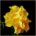 """fantazja107 """"^^^"""" (2006-11-23 21:05:30) komentarzy: 24, ostatni: piękne:)"""