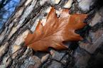 """Gardaś """"jesienna kompozycja"""" (2006-11-24 22:31:39) komentarzy: 21, ostatni: ładnie"""