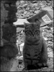 """BartS """"vSmieciarz"""" (2006-11-30 22:50:30) komentarzy: 12, ostatni: swietny kotinoll :)"""