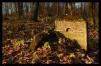 """vch22222 """"szczebrzeszyn6"""" (2006-12-08 08:40:35) komentarzy: 4, ostatni: piękna seria, pozdrawiam:)"""