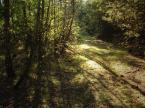 """agakolo """"leśne zakamarki"""" (2006-12-08 16:09:45) komentarzy: 5, ostatni: pięknie """"malujesz"""" na tej fotce, światełko:) żal, że taka mała"""