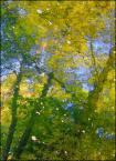 """Anavera """"Impresja jesienna pt. EGZYSTENCJA"""" (2006-12-08 19:43:53) komentarzy: 7, ostatni: świetne"""