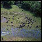 """David de Rosier """"Lot nad słoniowym gniazdem"""" (2006-12-10 20:54:54) komentarzy: 12, ostatni: FANTASTYCZNE!"""