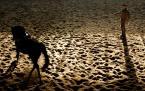 """Gosia Mąkosa """"lonża"""" (2006-12-11 20:39:23) komentarzy: 20, ostatni: Ja tak jak LlikeLocksley + kompozycja konia i lonżującego po przekatnej bdb i + za ostre(chyba:P) siodło :P"""
