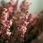 """Nickita """"ostatnie kolory tej jesieni..."""" (2006-12-14 16:28:56) komentarzy: 20, ostatni: :)"""