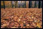 """andrzejj """"***"""" (2006-12-14 18:01:56) komentarzy: 5, ostatni: fajne. lubie jesien."""