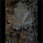 """Ravkosz """"... o zimie bajanie ... #1"""" (2006-12-18 19:02:00) komentarzy: 77, ostatni: śliczne :)"""