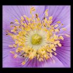 """Ungirith """"pure energy"""" (2006-12-19 17:11:02) komentarzy: 7, ostatni: ladnie pokazany, podoba mi sie :) pozdrawiam"""