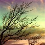 """meduzzzz """"Drzewa"""" (2006-12-22 11:34:53) komentarzy: 20, ostatni: +"""