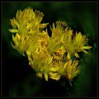 """beige """"... optymizm ..."""" (2006-12-27 20:47:04) komentarzy: 74, ostatni: :-))))))))))))))))))))))))))))))))))))))))"""