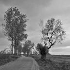 """Michał Drawert """"Droga"""" (2006-12-30 22:44:58) komentarzy: 11, ostatni: Bardzo dziękuję :D"""