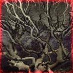 """meduzzzz """"Drzewo"""" (2007-01-05 11:56:40) komentarzy: 13, ostatni: fajnie patrzysz przez szkielko, ciekawe ptf pozdr"""