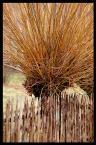 """Wojciech Sobota """"drzewo za płotem"""" (2007-01-12 16:03:32) komentarzy: 17, ostatni: chciałabym zobaczyć więcej tych drzew u Ciebie..."""