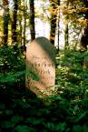 """Wilkowaty """"W zieleni..."""" (2007-01-12 17:50:50) komentarzy: 29, ostatni: Podobają mi się takie miejsca, jeśli można tak to napisać."""