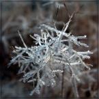 """Ravkosz """"o zimie bajanie #5"""" (2007-01-13 20:59:39) komentarzy: 48, ostatni: ładne"""