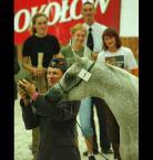 """Mopar """""""" (2007-01-17 13:19:14) komentarzy: 1, ostatni: Koń na piątkę, kot niewiadomo jaki, ale i tak z obu zrobią kiełbasę (reklama w tle)? :-)"""
