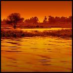 """malisz """"zastyganie"""" (2007-01-21 11:44:56) komentarzy: 90, ostatni: swietna fota"""