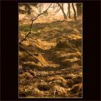 """pespe """"Patrz pod nogi chodząc po lesie"""" (2007-01-25 20:42:53) komentarzy: 33, ostatni: ładnie zaświeciło"""