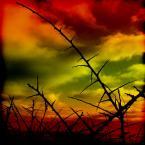"""meduzzzz """"Ciernie"""" (2007-01-31 20:37:20) komentarzy: 13, ostatni: ...podoba mi się twoja odwaga kolorystyczna...ślę promyki !!!"""