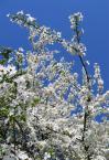 """paws """""""" (2007-02-03 13:28:21) komentarzy: 2, ostatni: hmm a moze na jednym kwiatku? takie... ah az czuc wiosne...."""