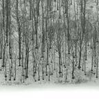 """Paulo """"pustka lasu"""" (2007-02-06 09:15:58) komentarzy: 17, ostatni: Dobre wypatrzenie. Przemawia. Pozdrawiam"""