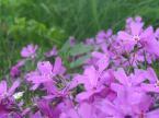 """Tomy_M """"zimowe wspomnienie wiosny ..."""" (2007-02-08 01:03:55) komentarzy: 0, ostatni:"""