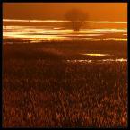 """Tomasz Stawowy """"wielka woda"""" (2007-02-09 22:47:25) komentarzy: 71, ostatni: swietne"""