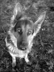 """irmi """"pies w karykaturze"""" (2007-02-10 15:37:55) komentarzy: 9, ostatni: o to swietne ! :)"""
