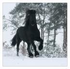 """Karolina Wengerek """"...."""" (2007-02-10 19:01:38) komentarzy: 65, ostatni: wspaniałe i wyjatkowe zdjecia koni robisz - serdecznie pozdrawiam"""