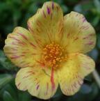 """Frotka """"kwiatek z blizna:)"""" (2007-02-15 11:17:11) komentarzy: 19, ostatni: haha , no ja tak nie pisałem ,>)"""