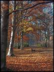 """BALTORO """"wspomnienie jesieni"""" (2007-02-16 09:40:21) komentarzy: 13, ostatni: niedługo będzie zielono...:)"""