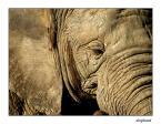 """Patulkaa """"stary slon"""" (2007-02-23 13:18:05) komentarzy: 4, ostatni: bardzo fajnie foto... emocje są... pozdrawiam."""