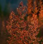 """lucyjka """"Trawka"""" (2007-02-23 18:42:21) komentarzy: 14, ostatni: piękna kolorystyka"""