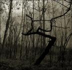 """Green Shadow """""""" (2007-02-24 21:23:19) komentarzy: 2, ostatni: a co bys powiedzial na mniejsza GO, zeby tego lesnego potworka wydobyc? klimat swietny ale taki jakis miszmasz"""